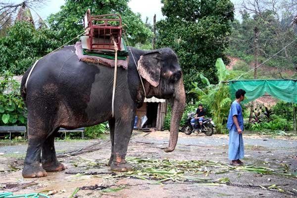 Mahout leading