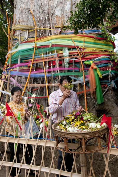 A man pays respect before offering a sprig - the trunk of the sacred tree may be seen in back
